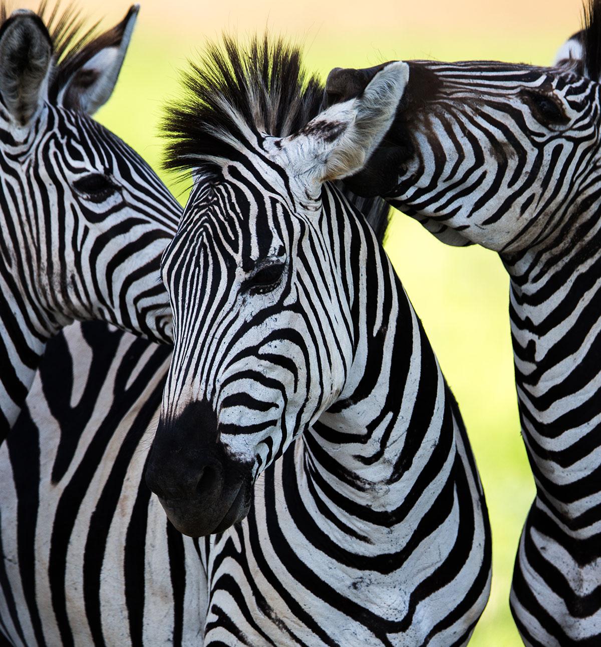 B4School FUN - Alphabet Adventure - Z is for Zebra